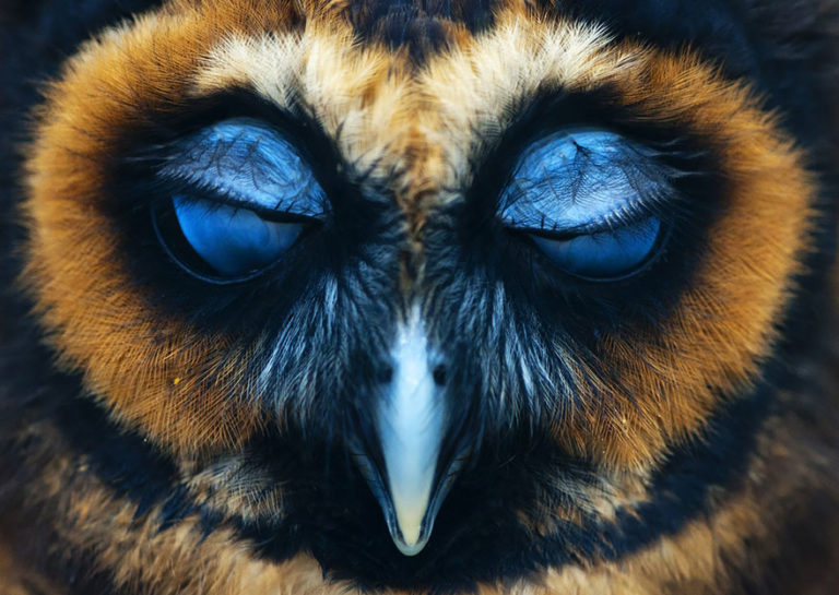 Owls Power: 10 Cool Photos Of These Awesome Creatures