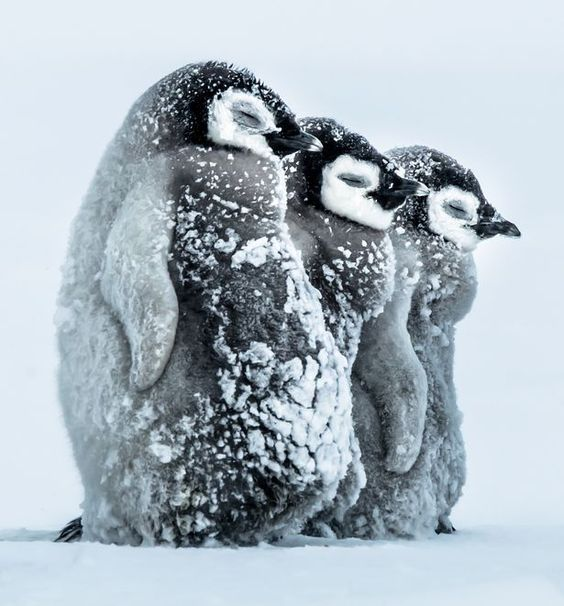 10 Cute And Funny Photos Of Adorable Penguins