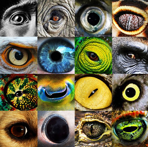 Humans VS Animals: Do We See The Same? (VIDEO)