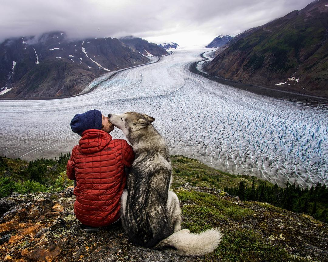 Adventure Time: 10 Adorable Travelling Pets
