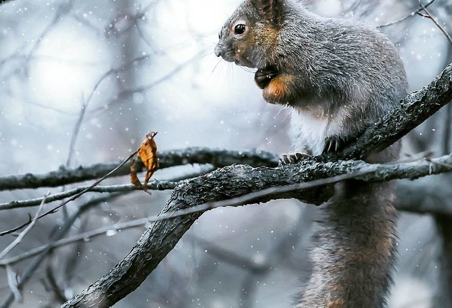 Forest Beauty: 10 Adorable Photos Of Finnish Forest Animals