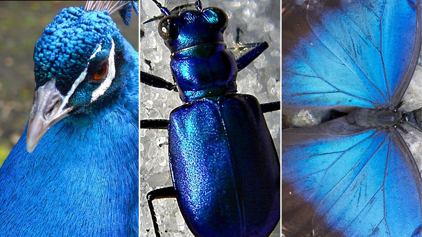 Colorful World: Why Is Blue So Rare? (VIDEO)