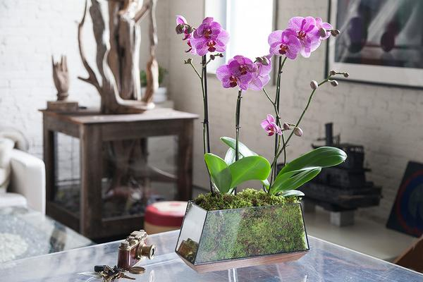 Flower World: 9 Simple Tips How To Take Care Of Orchids