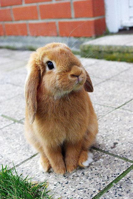 Honey Bunnies: 10 Adorable Fluffs To Make You Smile